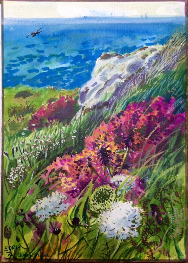 Wild flowers of Cornwall. Cloggy, St Ives